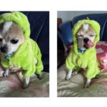 ARJOSA Puppy Dog Cat Thickened Hoodie Jumpsuit Dinosaur Dragon Costume Winter Coat Clothes 3