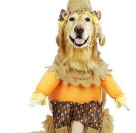 Pet Scarecrow Dog Costume For X-small Dogs by Pet Friendzy