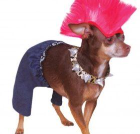 Rubies Costume Company Punk Rocker Pet Costume and Wig