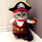 SELMAI Pet Cat Dog under 20 pounds Small Dog Pirate Costume Coat with Adjustable Hat 3