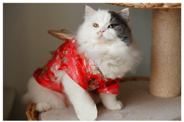 TOPSUNG Dog Clothes Kimono Style Costume Dog Princess Bowknot Dress Clothes For Small Dogs-Cats