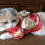 TOPSUNG Dog Clothes Kimono Style Costume Dog Princess Bowknot Dress Clothes For Small Dogs-Cats 7