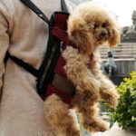 Alfie Pet by Petoga Couture - Jaden Pet Backpack or Front Carrier with Adjustable Strap 4