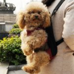 Alfie Pet by Petoga Couture - Jaden Pet Backpack or Front Carrier with Adjustable Strap 9