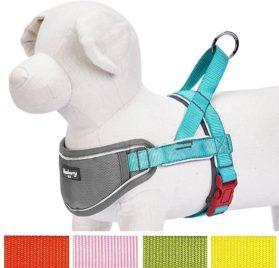 Blueberry Pet New 5 Colors Soft & Comfy 3M Reflective Strips Padded Dog Harness Vest