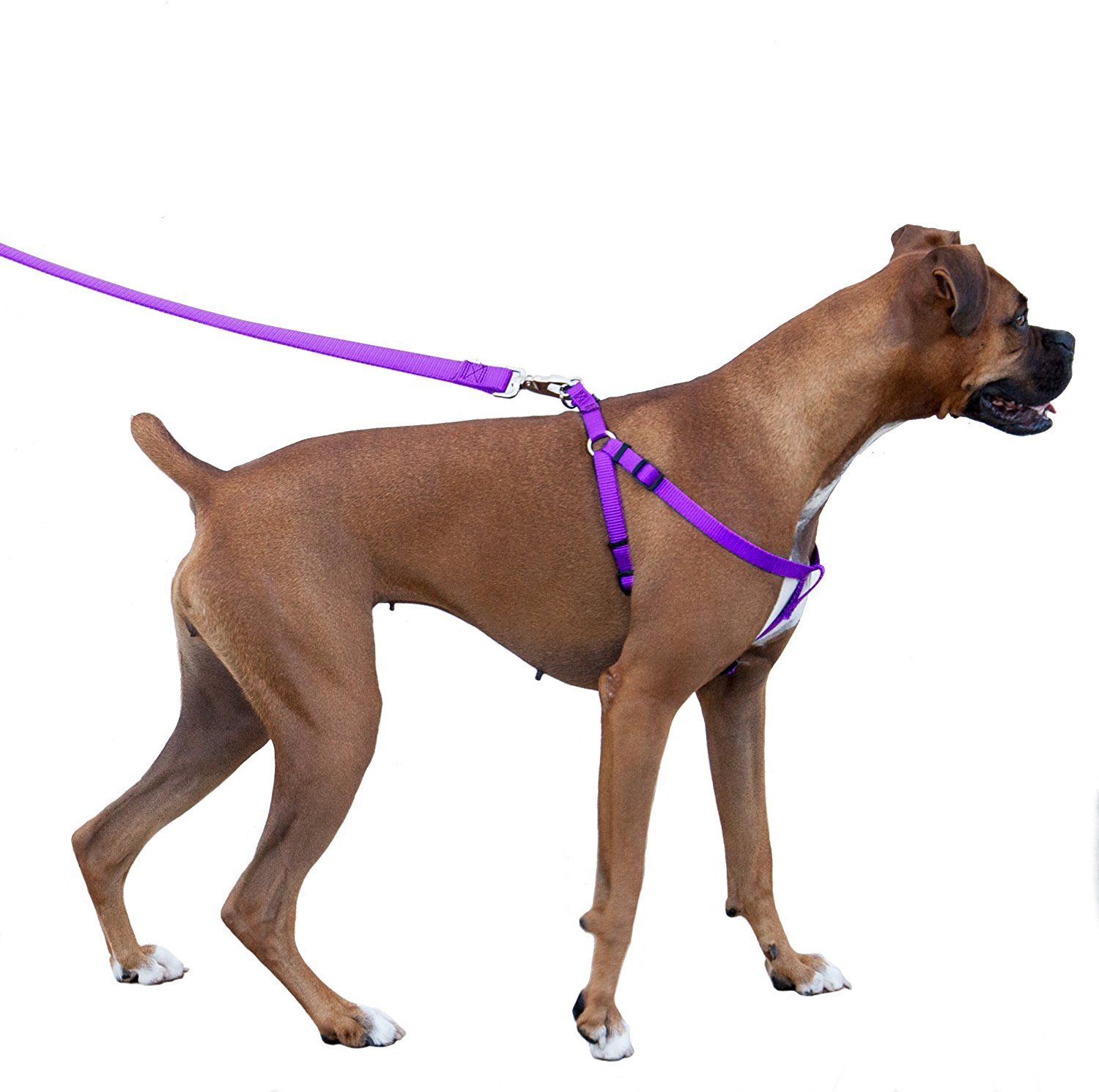 Best Dog Walking Accessories