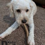Premium Elk Antlers for Dogs by Doggie Dealz All Natural Antler Dog Chew Organic, Healthy & Long Lasting Dog Treat Wild Sourced in the USA 6