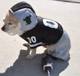 Dog Gone Cute by Lou's Doggie Boutique 4 Piece Football Costume (Jersey, Pants, Helmet and Toy Ball)-Extra Small (XS) 2