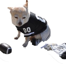 Dog Gone Cute by Lou's Doggie Boutique 4 Piece Football Costume (Jersey, Pants, Helmet and Toy Ball)-Extra Small (XS)