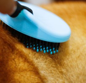 DELE Dog & Cat Brush for Grooming Short or Long Hair Pin Brush for Massage with No Slip Handle Professional Pet Grooming Tools 2