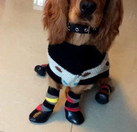 Alfie Pet by Petoga Couture - Wallace Set of 4 Rubber Dipped Dog Paw Protection Socks 2