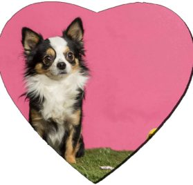 Liili Mousepad Heart Shaped Mouse Pads Mat ID- 26674182 Chihuahua sitting in an easter scenery 2