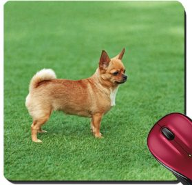 Liili Suqare Mousepad 8x8 Inch Mouse Pads Mat Red chihuahua dog on green grass Selective focus 28451462