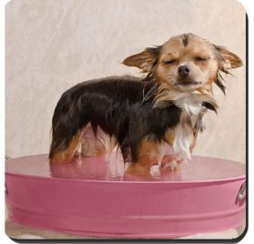 Liili Suqare Mousepad 8x8 Inch Mouse Pads Mat Relaxed chihuahua puppy taking a bath standing in pink bathtub IMAGE ID 11693912 2