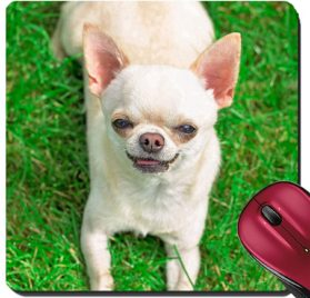 Liili Suqare Mousepad 8x8 Inch Mouse Pads Mat chihuahua on the grass a summer day Image ID 22129040