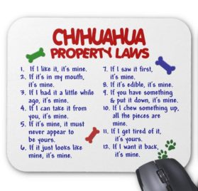 Zazzle Chihuahua Property Laws 2 Mouse Pad
