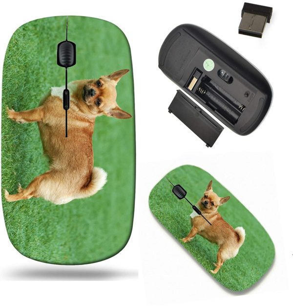 Liili Wireless Mouse Travel 2.4G Wireless Mice with USB Receiver, Click with 1000 DPI for notebook, pc, laptop, computer, mac book ID- 28517538 Red chihuahua dog on green grass Selective focus