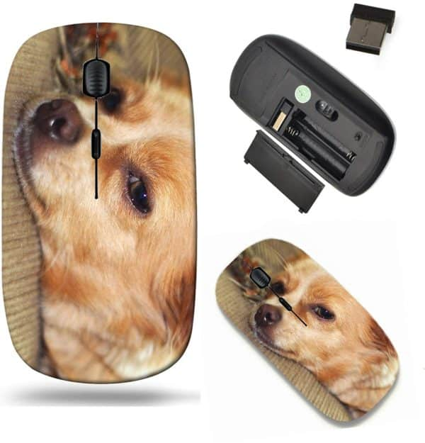 Liili Wireless Mouse Travel 2.4G Wireless Mice with USB Receiver, Click with 1000 DPI for notebook, pc, laptop, computer, mac book ID- 29286812 Cute chihuahua puppy napping on the couch