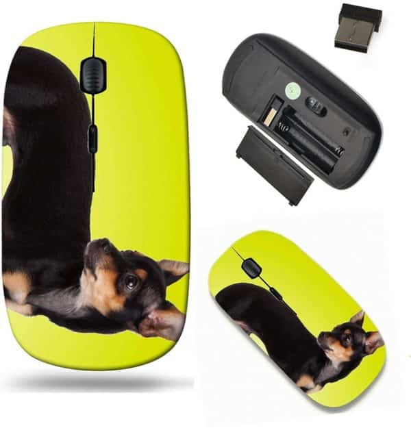 Liili Wireless Mouse Travel 2.4G Wireless Mice with USB Receiver, Click with 1000 DPI for notebook, pc, laptop, computer, mac book IMAGE ID- 37642804 adorable Chihuahua puppy on Yellow background