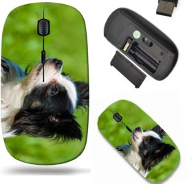 Liili Wireless Mouse Travel 2.4G Wireless Mice with USB Receiver, Click with 1000 DPI for notebook, pc, laptop, computer, mac book Little chihuahua dog in a meadow Image ID 21723541
