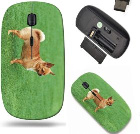 Liili Wireless Mouse Travel 2.4G Wireless Mice with USB Receiver, Click with 1000 DPI for notebook, pc, laptop, computer, mac book Red chihuahua dog on green grass Selective focus 28451462