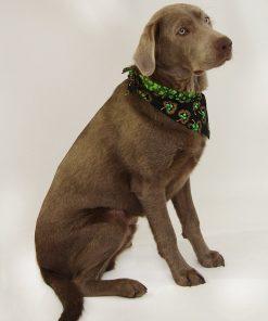 """St. Patrick's Day Dog Bandana - St. Patrick's Shamrocks (S) Ties on 9"""" - 10"""" neck - 2"""