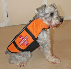 Alfie Couture Designer Pet Apparel - Alvis Pet Life Jacket - Color: Orange - 2