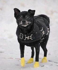 Dog Boots Pawz Set of 12 XXSmall 4
