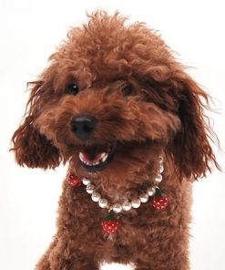 Alfie Couture Designer Pet Jewelry - Nora Pearl Necklace with Red Strawberry for Dogs and Cats-2