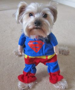 Alfie Pet by Petoga Couture - Superhero Costume Superman - 1