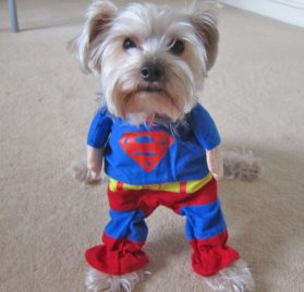 Alfie Pet by Petoga Couture - Superhero Costume Superman - 1