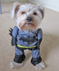 Alfie Pet by Petoga Couture - Superhero Costume Batman - 1