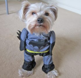 Alfie Pet by Petoga Couture - Superhero Costume Batman - 1