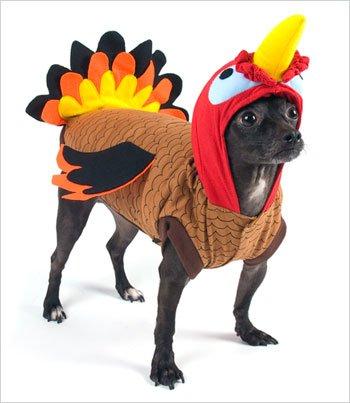 Turkey Costume For Dogs Size 5 14 Quot L X 18 5 Quot 20 5 Quot G