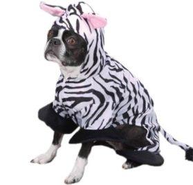 Zack & Zoey Zebra Pet Costume