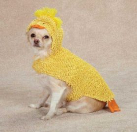 Zack & Zoey Just Ducky Dog Costume, Large, Yellow - 1