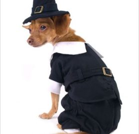 "Pilgrim Boy Costume for Dogs - Size 3 (10.75"" x 14"" - 16"" g) - 1"