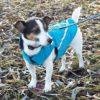 RC Pet Products West Coast Rain Wear Dog Coat - 2