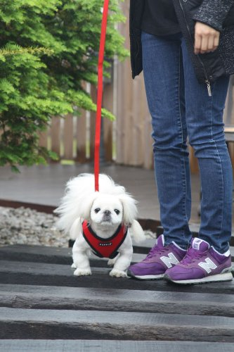 Puppia Soft Dog Harness 5