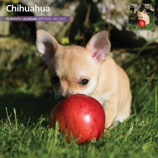 Chihuahua 2015 Wall Calendar
