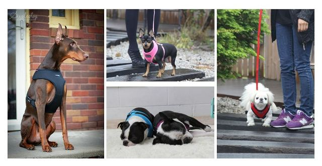 Sample Dogs
