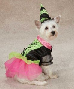 Zack & Zoey Witchy Business Pet Costume - Green