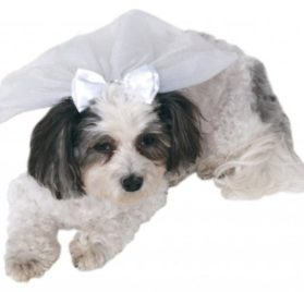 Rubies Costume Company Wedding Veil for Pets, Small/Medium