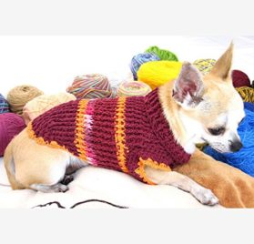 Designer Dog Sweater Cotton Burgundy Maroon Handmade Crochet Pet Clothing Popular Puppy Clothes Chihuahua Dk870 Myknitt - Free Shipping-1