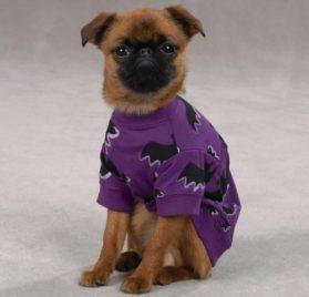 Zack & Zoey Bat Pet Tee Shirt-1
