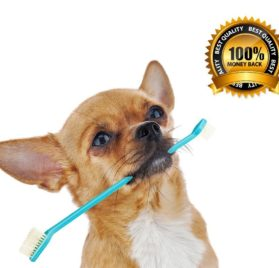 Dog Toothbrush Set with Two Dual Double Headed Toothbrushes By Legacy Pet Supplies - 1