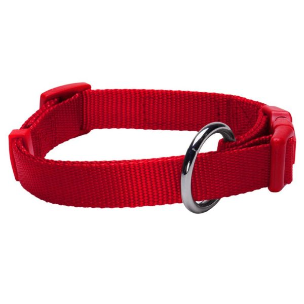 Blueberry Pet New Buckle Better Basic Classic Solid Dog Collar - 2