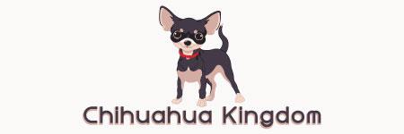 Chihuahua Kingdom