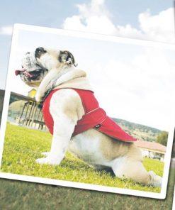 Urban Dog Wear Polar Nylon Jacket - 1