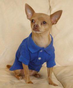Zack & Zoey Pet Polo Shirt Shirt - Nautical Blue - 3